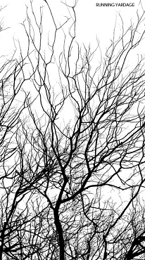 Silhouette Northcott Border Trees Black White